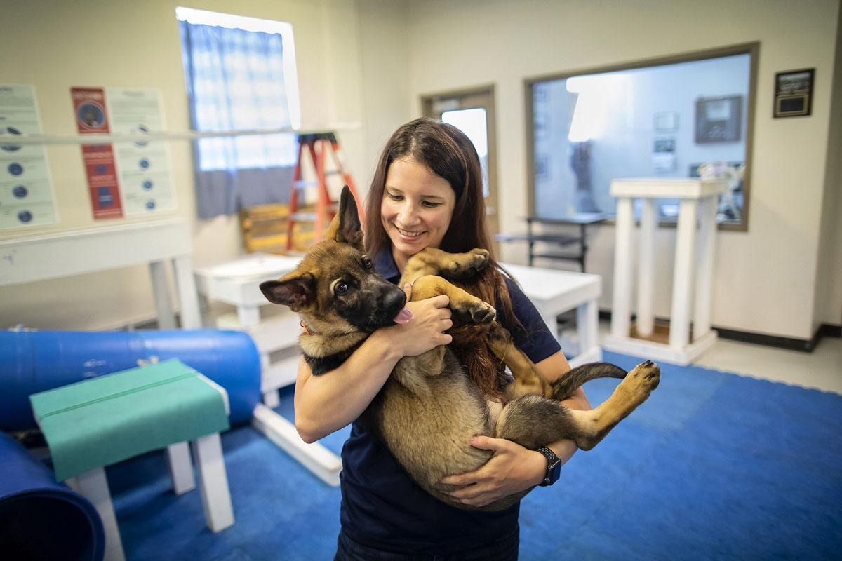 Dechra Veterinary Products Announces their Sponsorship of the University of Pennsylvania Veterinary Working Dog Center Residency